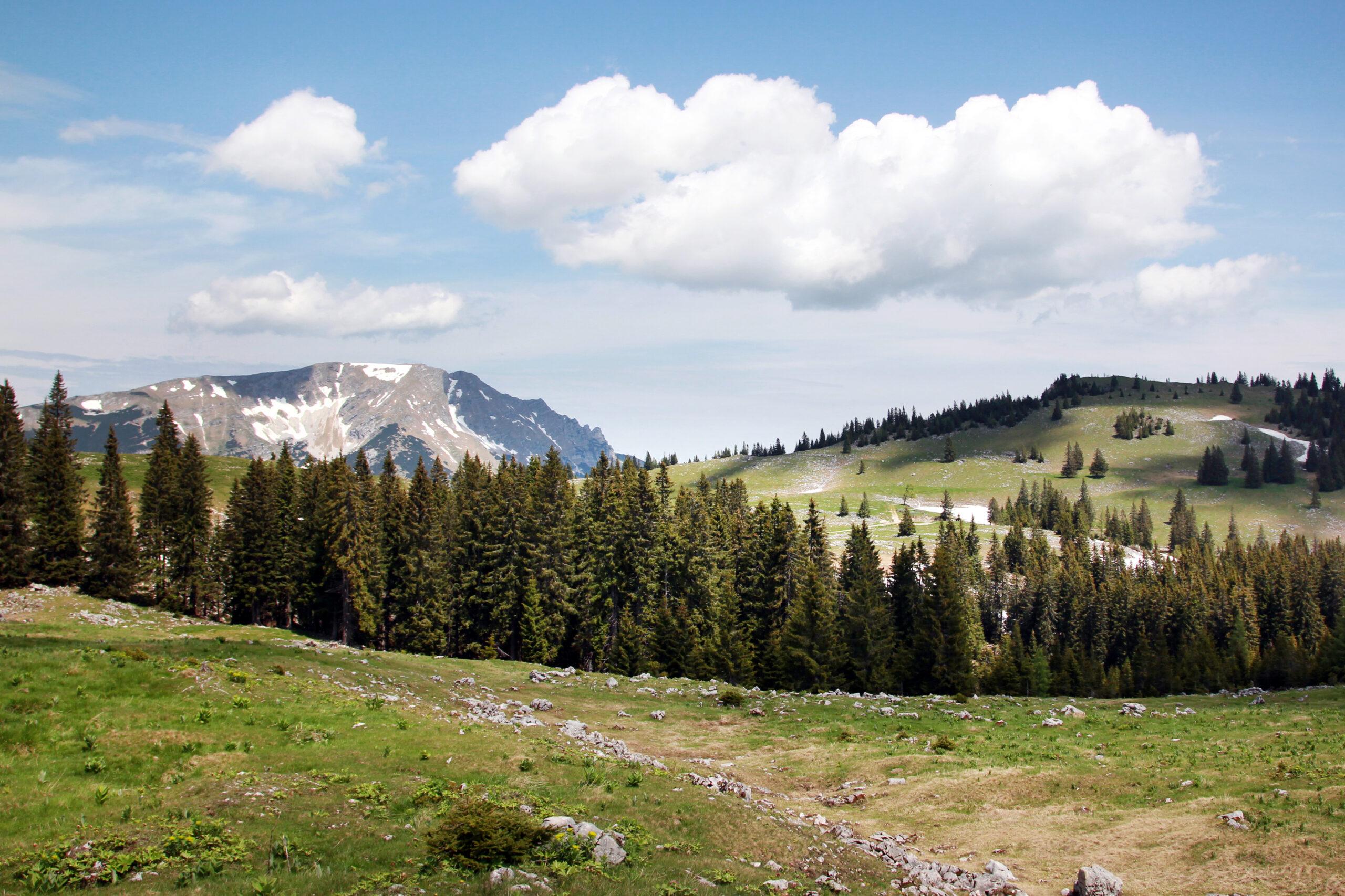 wf126205_© Mostviertel Tourismus : weinfranz.at